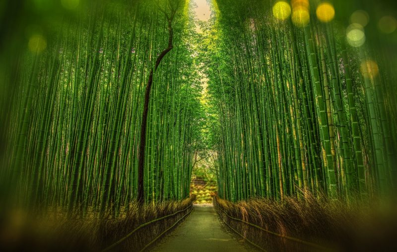 Kyoto Japan Bamboo Bokeh Adventure Forest Travel